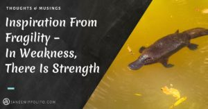Inspiration From Fragility – In Weakness, There Is Strength